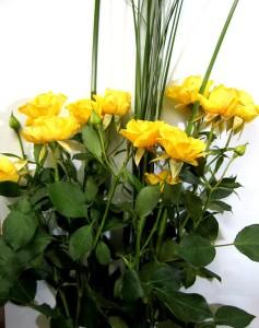 Розы кустовые и берграс